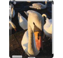 sunny swan iPad Case/Skin