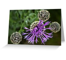 Looking Down on Thistle Flower Greeting Card