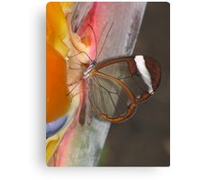 Glasswing 02 Canvas Print