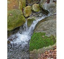 Swanson Creek Photographic Print