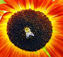 Bee on Sunflower, (Pollinating a Fractal) by Billlee