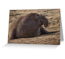 male Northern elephant seal Greeting Card