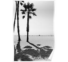 Palm Trees - Black & White Poster