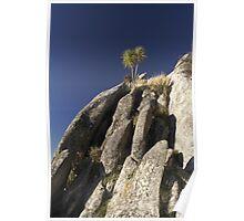 Cabbage Tree Atop Limestone Rocks Poster