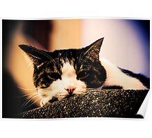 Photographie Dans un regard de chat Poster