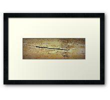 Sago No. 6 Framed Print