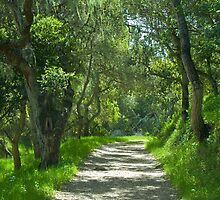 Pathway under the oaks- Monterey, California by David Chesluk