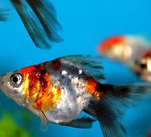 Little Fish by Henrik Lehnerer