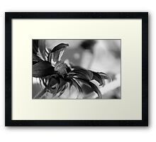 GARDEN FLOWER Framed Print