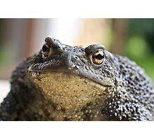 Mrs. Frog Photographic Print