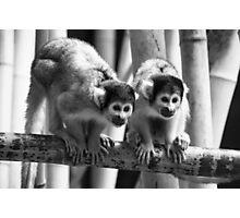 Bolivian Squirrel Monkeys at Dublin Zoo  Photographic Print
