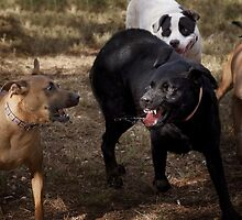 Dogs with game face on .34 by Alex Preiss