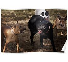 Dogs with game face on .34 Poster