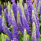 Lupins (I think) - all products by Shulie1