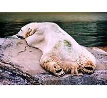 Polar Bear in the Hot Sun. VividScene Photographic Print