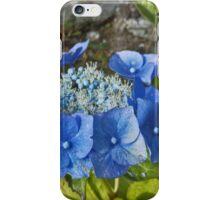Blue hydrangea - halo iPhone Case/Skin