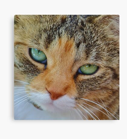 Hello, my name is Isabella.  Canvas Print