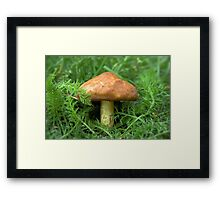 Mushroom in the grass Framed Print