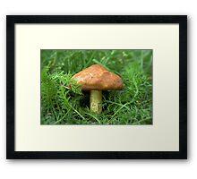 Mushroom in the grass Framed Print