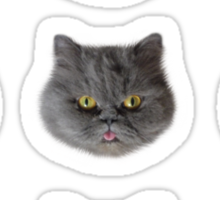 Tara - Surprised Funny Cat with tongue Sticker