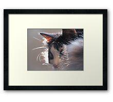 Fur Collar Framed Print