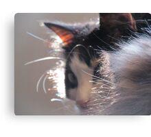 Fur Collar Canvas Print