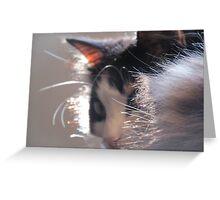 Fur Collar Greeting Card