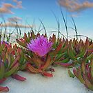 Bloom Where You Are Planted - Gold Coast Qld Australia by Beth  Wode