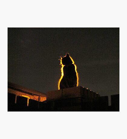 Mystery Cat Photographic Print