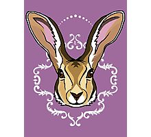 Hare Brained Photographic Print
