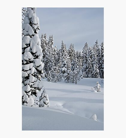 Serene Snow Scene Photographic Print