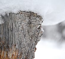 Snow Covered Tree Stump by Jared Manninen