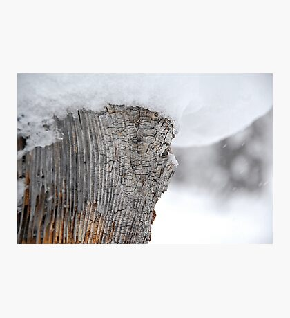 Snow Covered Tree Stump Photographic Print