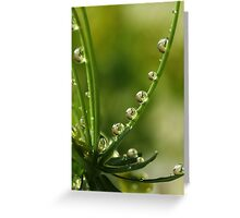 Garden Pearls Greeting Card