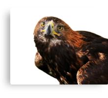 Golden eagle looking at camera  Canvas Print