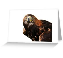 Golden eagle looking at camera  Greeting Card