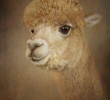 Alpaca 2 by Jan Pudney