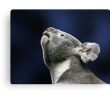 Cute Koala looking up  Canvas Print