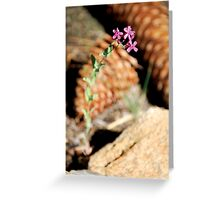 Wildflower Surrounded by Pine Cones Greeting Card