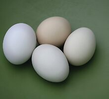 pasture raised eggs by neovibe
