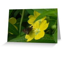 Little Moth and Narrow Leaf Water Willow Greeting Card