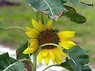 Mini Sunflower by FrankieCat