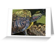 slider turtle Greeting Card