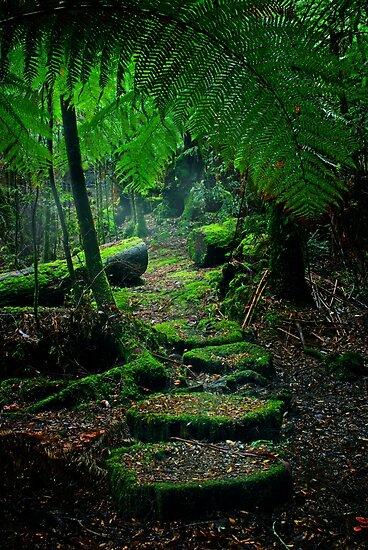Mother Earth - Tarkine Rainforest by Rhana Griffin