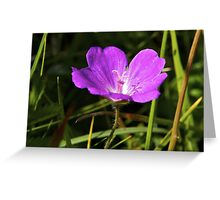 Cranesbill, Dun Eochla, Inishmore, Aran Islands Greeting Card