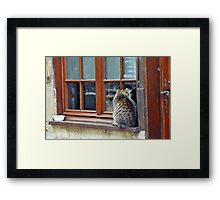 looking for love..... Framed Print