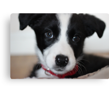 A puppy named Ollie Canvas Print