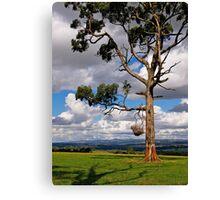 Gippsland giant, Eucalyptus,  Drouin, Victoria. Canvas Print
