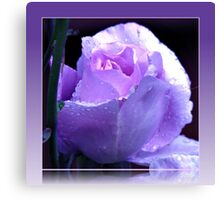 Dreamy Blue Moon Rose Beauty in Reflection Frame Canvas Print