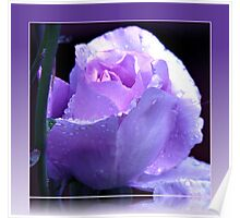 Dreamy Blue Moon Rose Beauty in Reflection Frame Poster